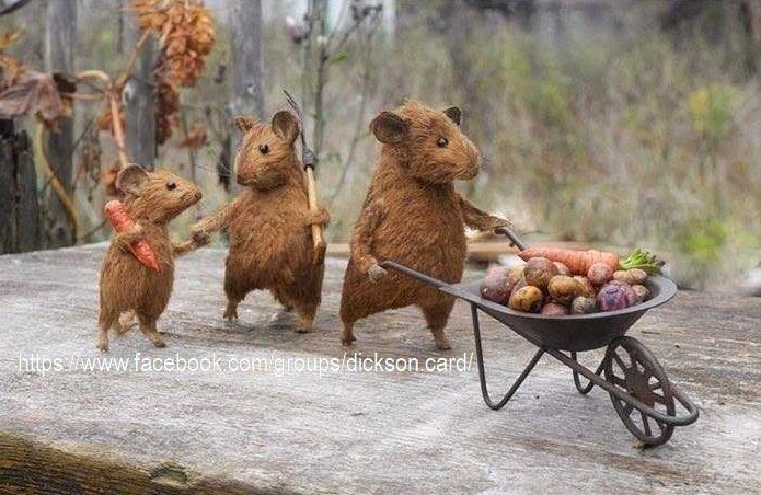 Rodents with a cart