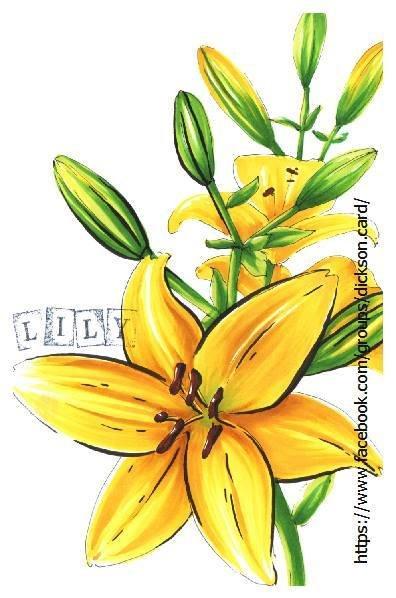 Yellow lily © Maria Shishcova