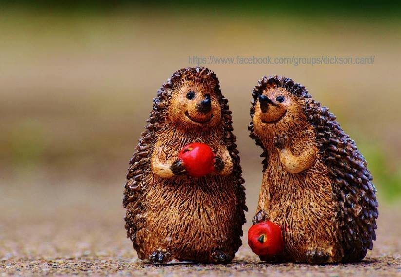 Hedgehogs with apples