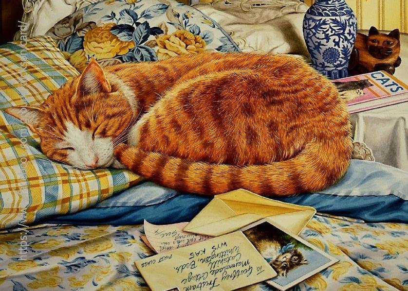 Cat sleeping on the bed by © Geoffrey Tristram
