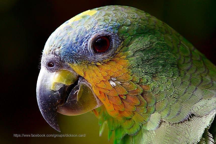 🦜 Parrot