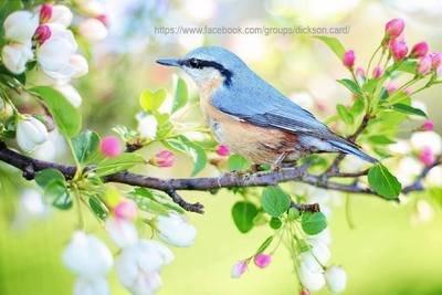 Bird on a branch in flowers