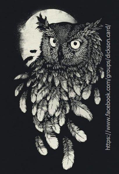 Owl - black / white image