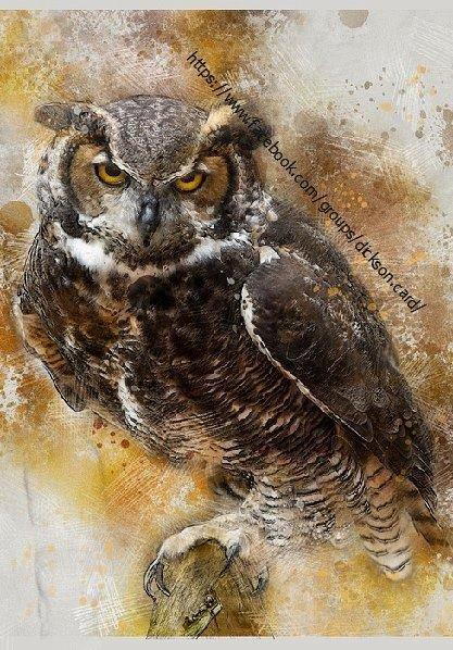 Owl, drops