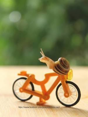 Snail on a bicycle​