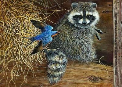 Raccoon with a bird 🦡