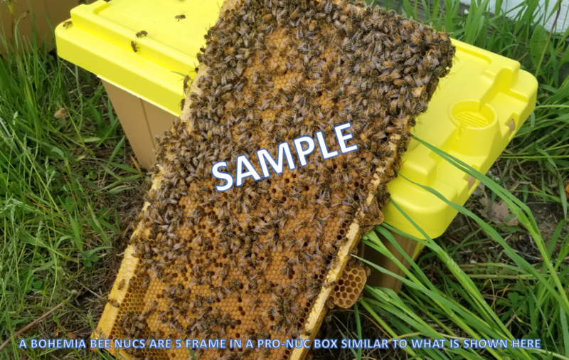 2021 Bohemia Apiary 5 Frame Overwintered Nucleus Colony with 2020 Mated Queen  – $200.00 with an EARLY APRIL PICKUP  ($60.00 DEPOSIT DUE TODAY +$10 IF YOU KEEP PRO-NUC BOX)
