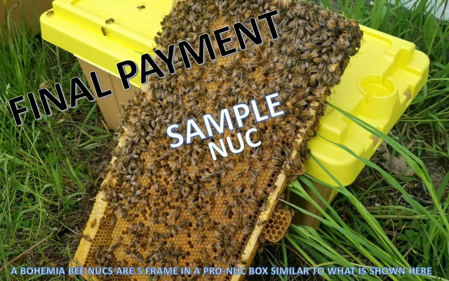 2021 Bohemia Apiary 5 Frame Overwintered Nucleus Colony with 2020 Mated Queen – $200.00 with an EARLY APRIL PICKUP (FINAL INSTALLMENT PAYMENT)