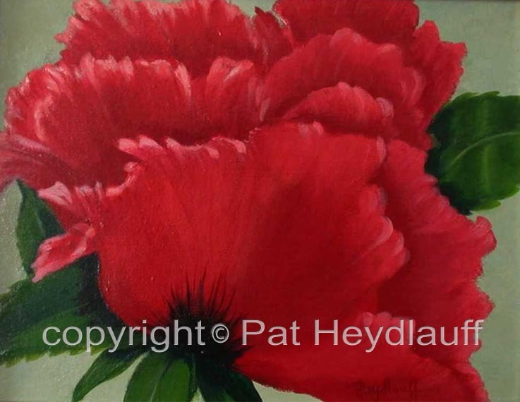 Ruffled Poppy CNV125 / 14x11