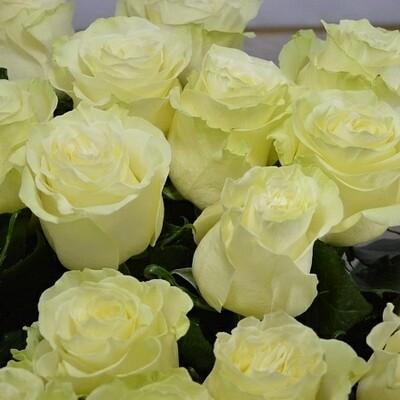 """Роза """"Мондиаль"""" 70 см"""