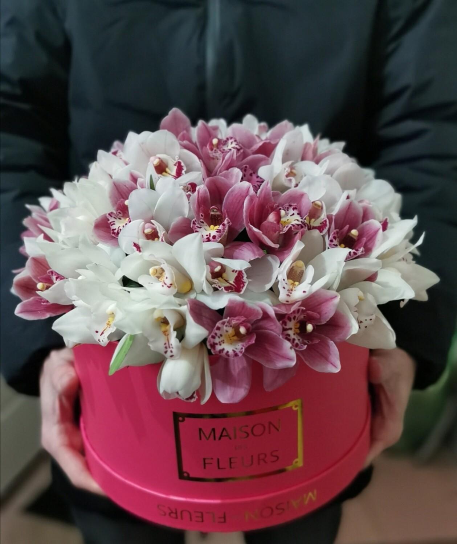 51 орхидея