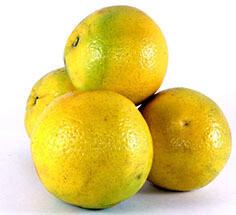 Naranjas Dulces Barcelo 5 Lbs (Malla)
