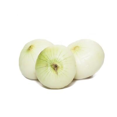 Cebolla Blanca LB