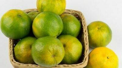 Naranja Agria Criolla (LB)