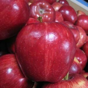 Apple Trees Dwarf Red Delicious