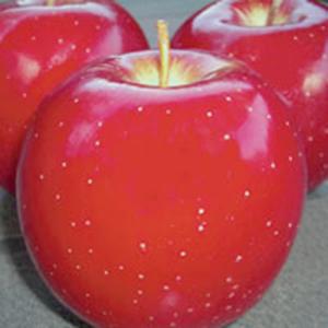 Apple Trees Dwarf Red Fuji