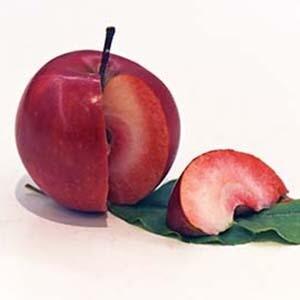 Apple Trees Dwarf Red Love