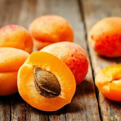 Apricot Tree Dwarf Story's Improved
