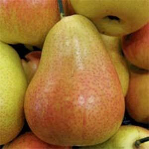 Pear Trees Corella
