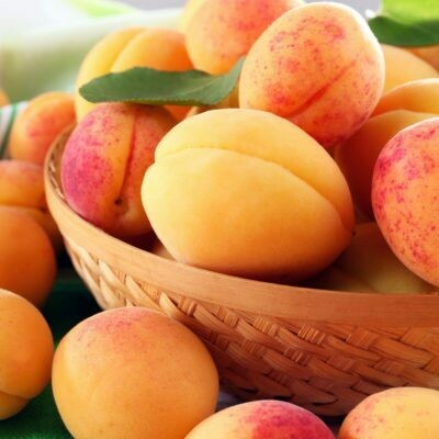 Apricot Tree Moorpark
