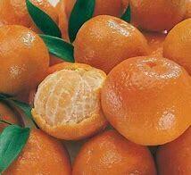 Mandarin Tree Emperor