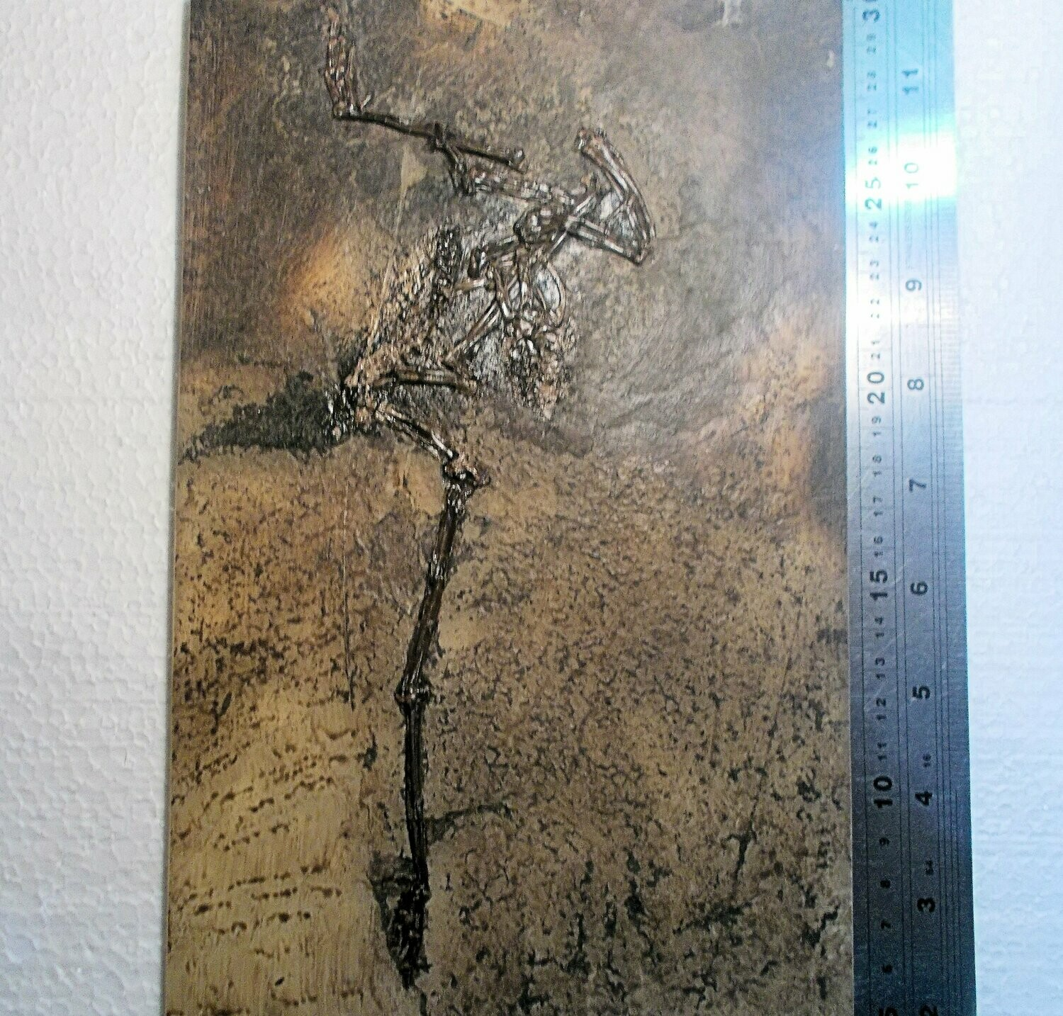 Fine and rare near-complete bird: Messelornis cristata; excellent detail of limbs with digits and claws, and wing bones !