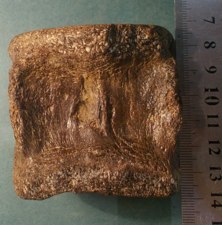 Fine 6.5cm X 7cm English Sauropod vertebra; Jurassic of Abingdon, Oxfordshire, UK