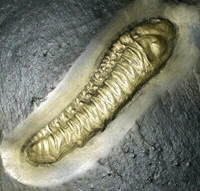 Excellent 7.8cm prone, articulated Chotocops ferdinandi with good eye: Devonian, Bundenbach, Germany