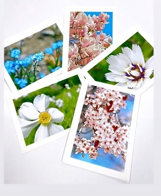 Photo Notecard Gift Pack A Floral