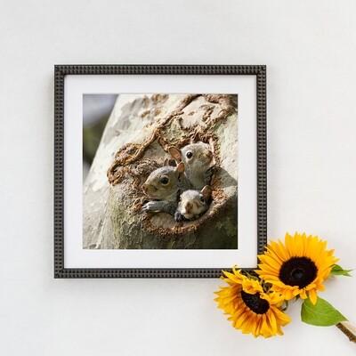 Grey Squirrels in Central Park 9948 2019 Framed Print