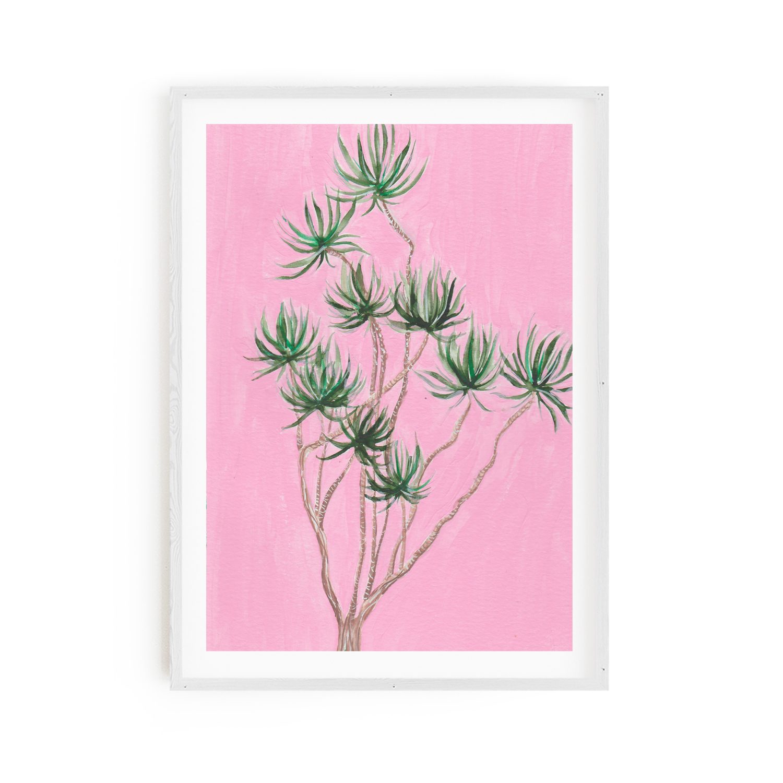 Aloe Barberae on Pink Print 8x10