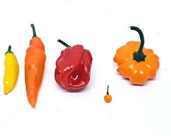 "Aji pepper ""SEED""collection- 50+ seeds"