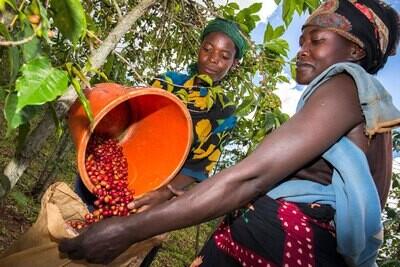 Trickle Up Coffee - Rwanda Gatare