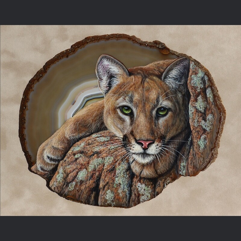 Fixated- Mountain Lion