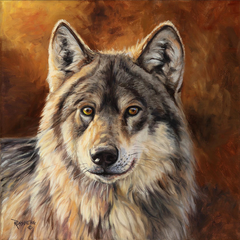 Locked On- Grey Wolf