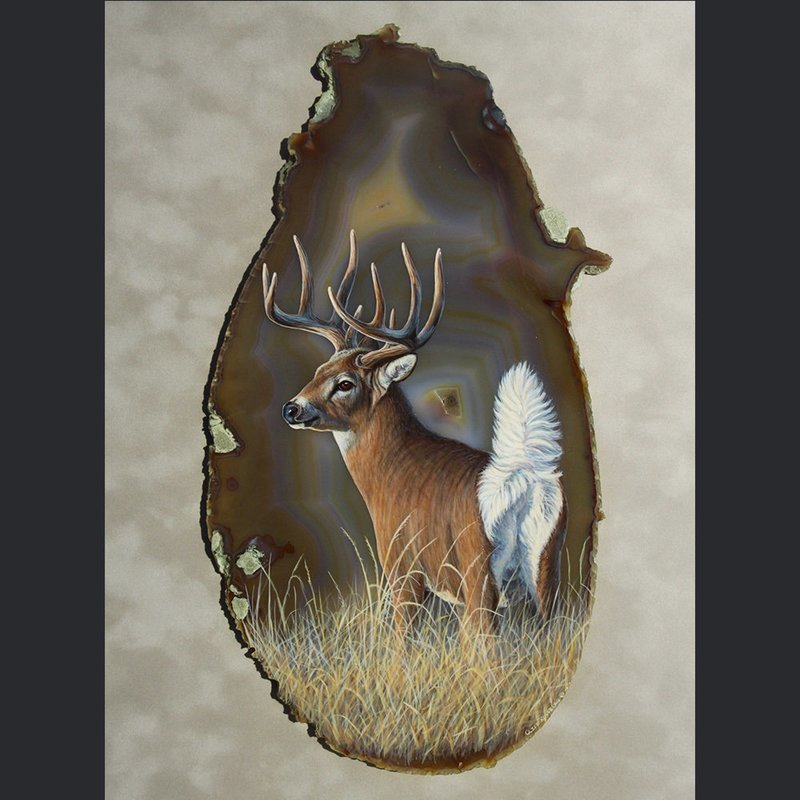 FLASH-WHITETAIL
