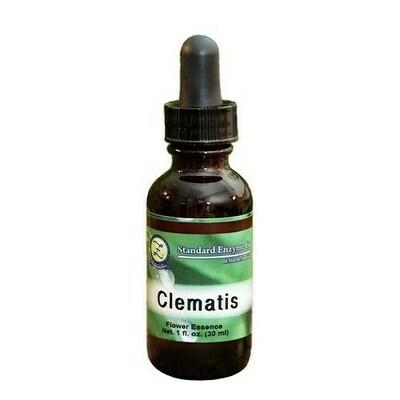 Clematis Flower Essence