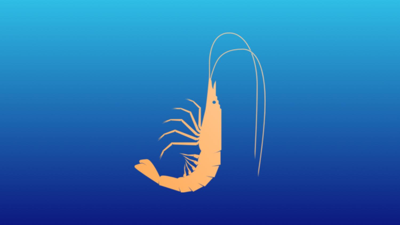 1 Pound 15-19 Count Shrimp