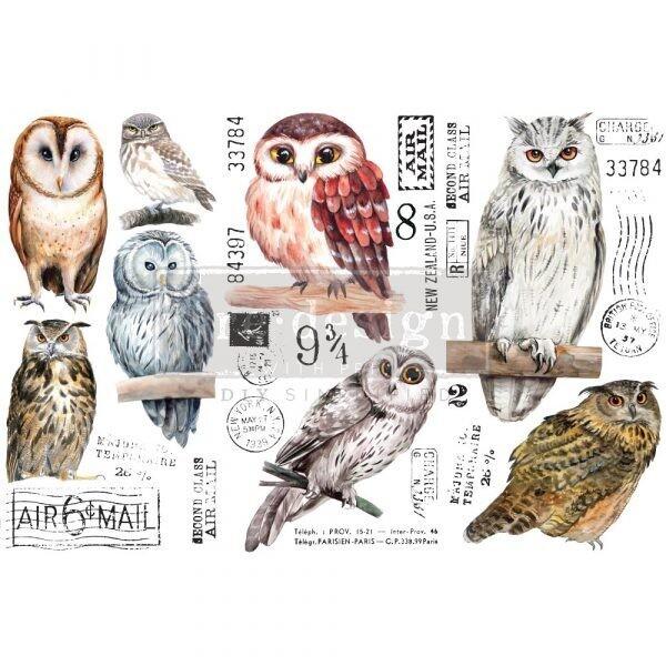 OWLS #656010