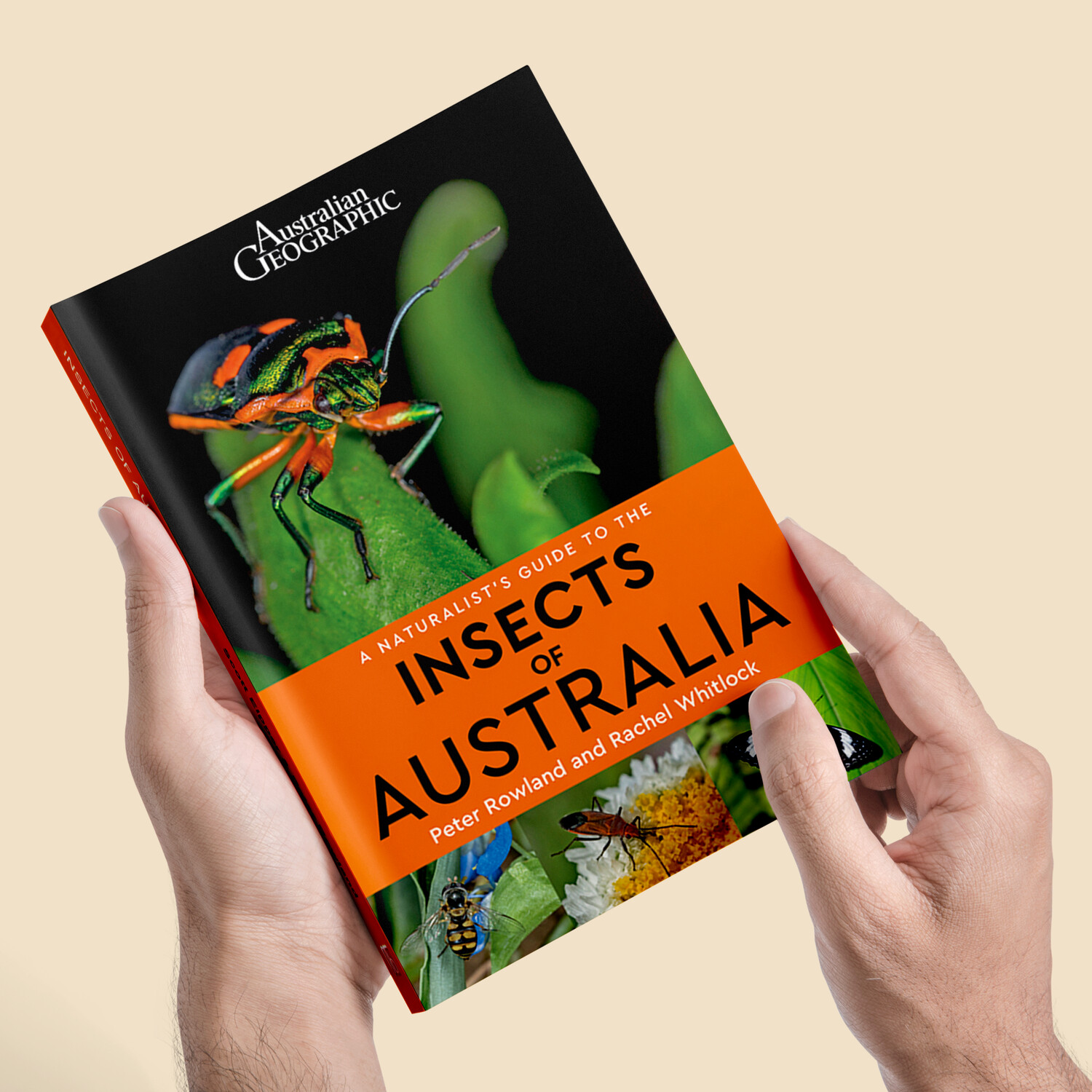 A Naturalist's Guide to the Insects of Australia