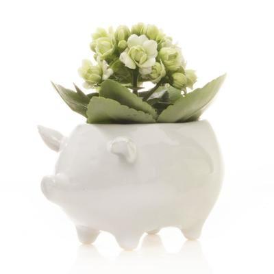Pig Succulent Planter