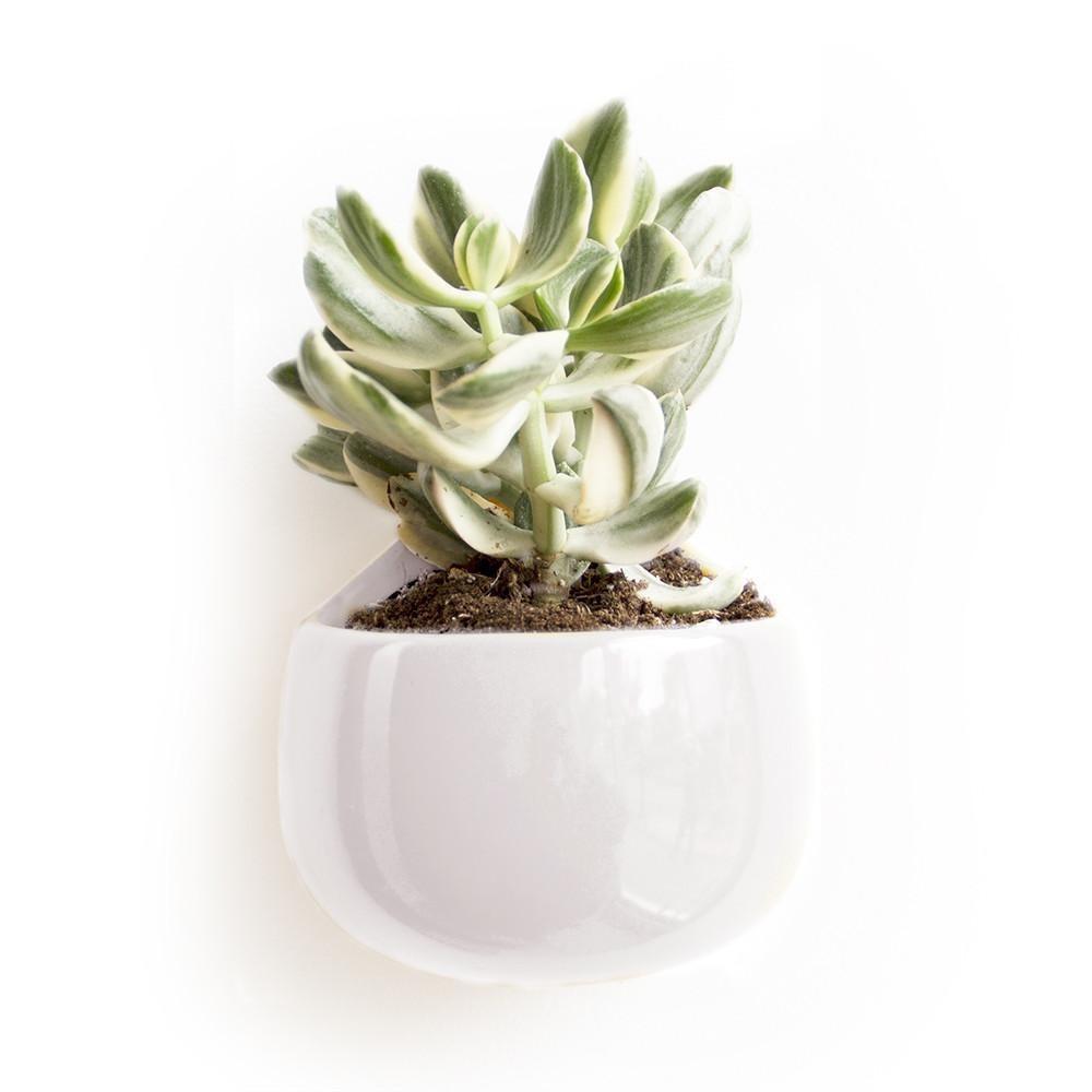 Nest Wall Vase