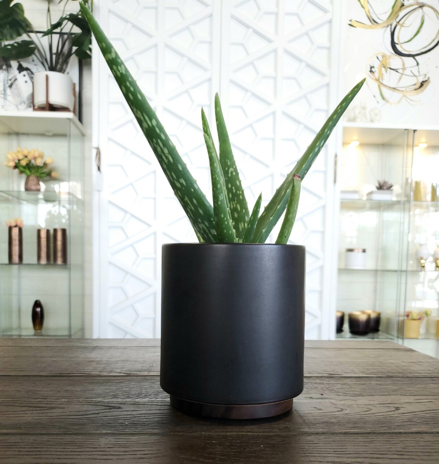 The Four Potted Aloe Plant