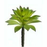 Succulent Green Small