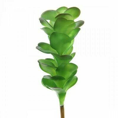 Green Succulent Stem