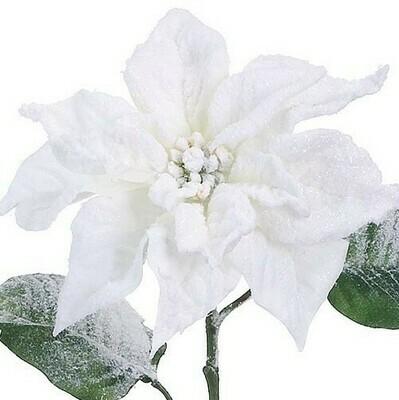 White Snow Poinsettia