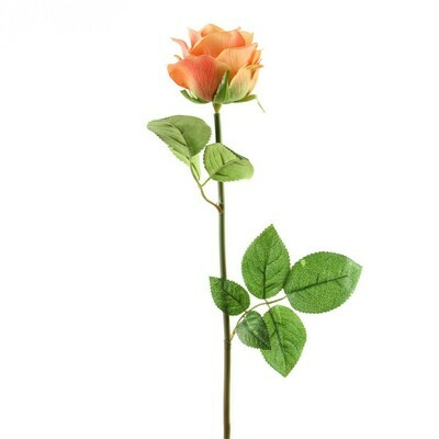 Dutch Rose Orange
