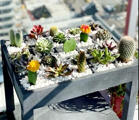 Custom Succulent Table