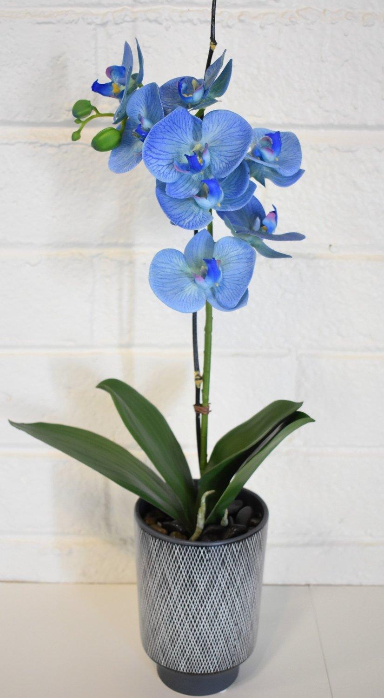 Bergen Blue Silk Phalaenopsis Orchid