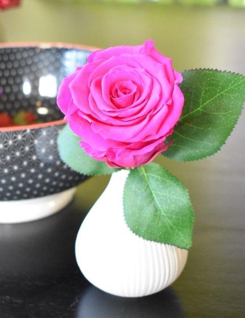 Frost Preserved Forever Rose